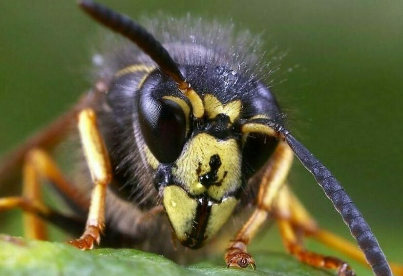 A close up of a wasp